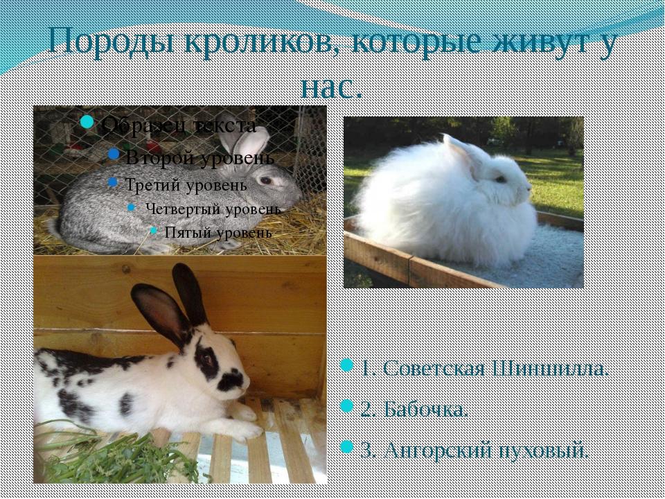 Породы кроликов, которые живут у нас. 1. Советская Шиншилла. 2. Бабочка. 3. А...