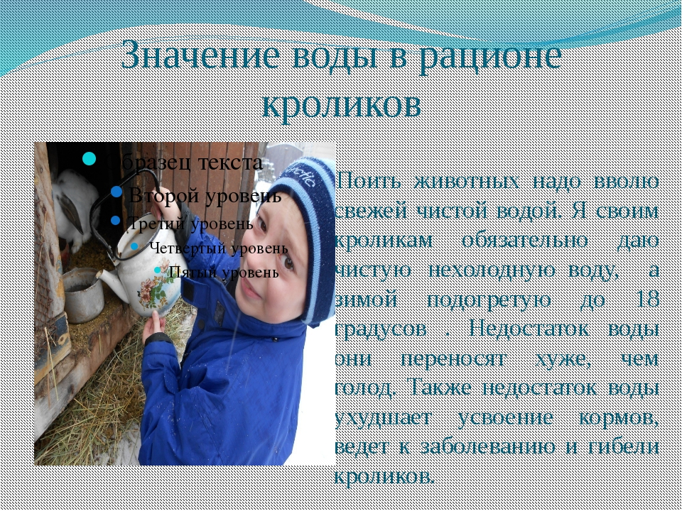 Значение воды в рационе кроликов Поить животных надо вволю свежей чистой водо...