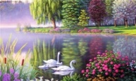 C:\Users\intel\Desktop\Peaceful_Swans_by_Kim_Norlien__1280x800_wallpaperhi.com.jpg