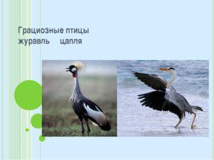 Грациозные птицы журавль цапля