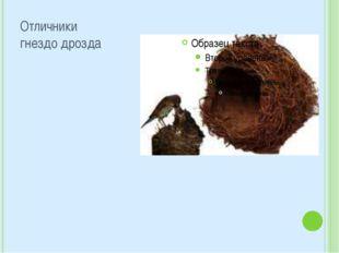 Отличники гнездо дрозда