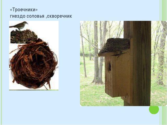 «Троечники» гнездо соловья ,скворечник
