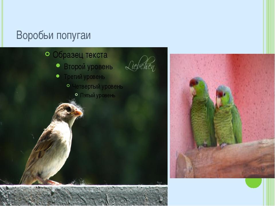 Воробьи попугаи
