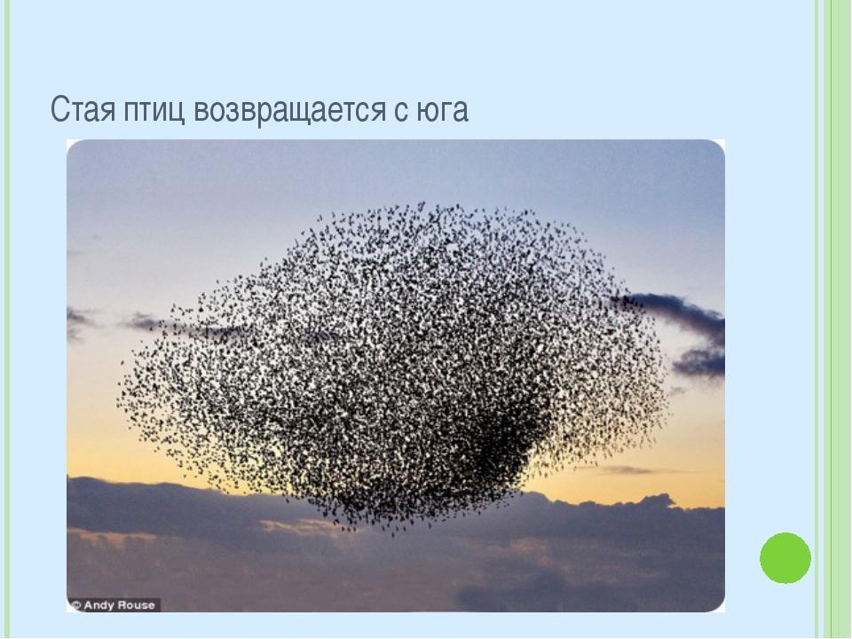 Стая птиц возвращается с юга