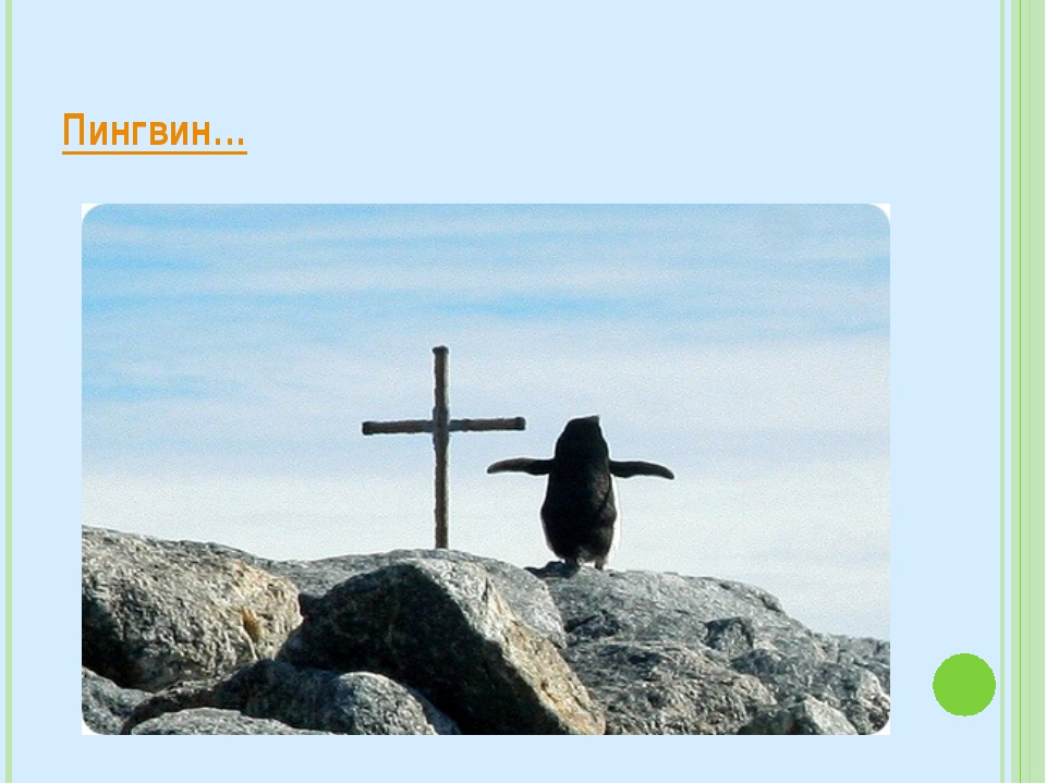 Пингвин…