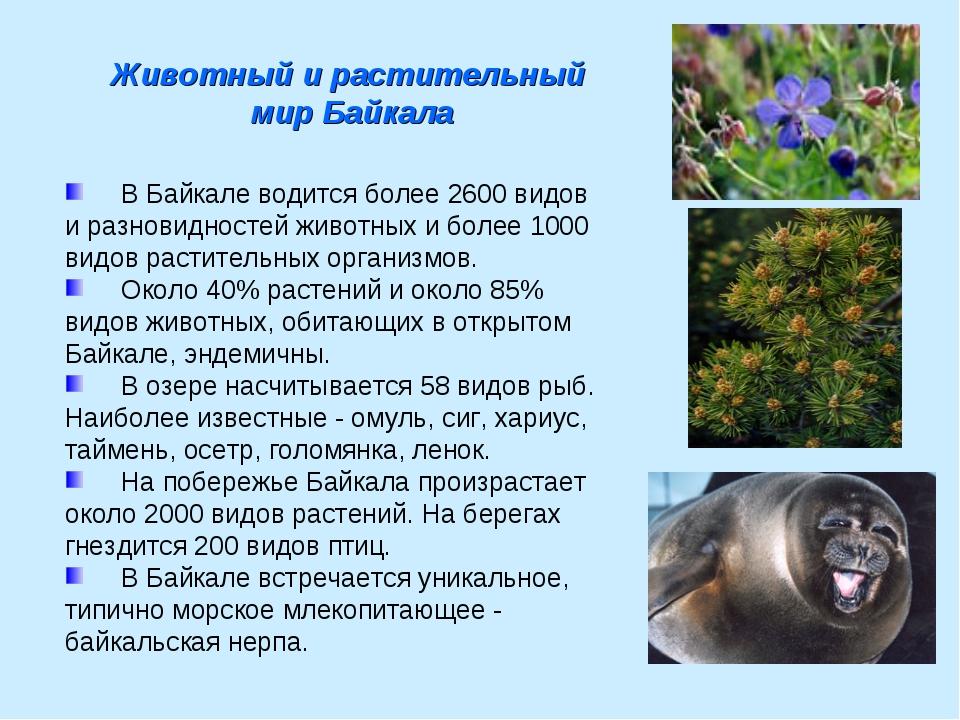 В Байкале водится более 2600 видов и разновидностей животных и более 1000 ви...