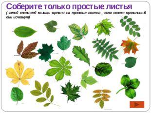 Соберите только простые листья ( левой клавишей мышки щелкни на простые листь