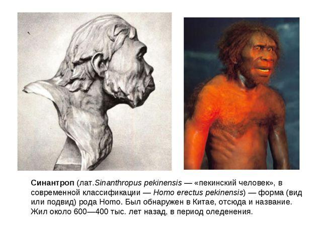Синантроп(лат.Sinanthropus pekinensis— «пекинскийчеловек», в современной к...