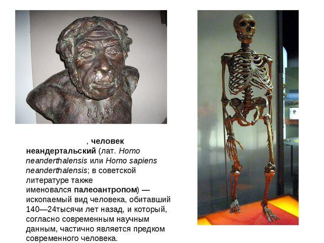 Неандерта́лец,человек неандертальский(лат. Homo neanderthalensisилиHomo s...