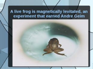 A live frog is magnetically levitated, an experiment that earned Andre Geim