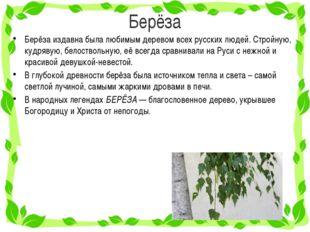 Берёза Берёза издавна была любимым деревом всех русских людей. Стройную, кудр