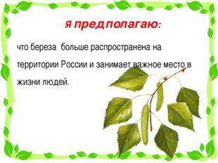 Я предполагаю: что береза больше распространена на территории России и занима