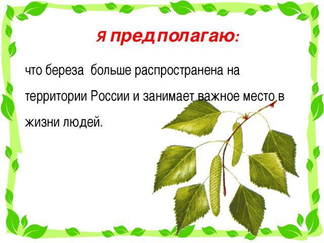 Я предполагаю: что береза больше распространена на территории России и занима...
