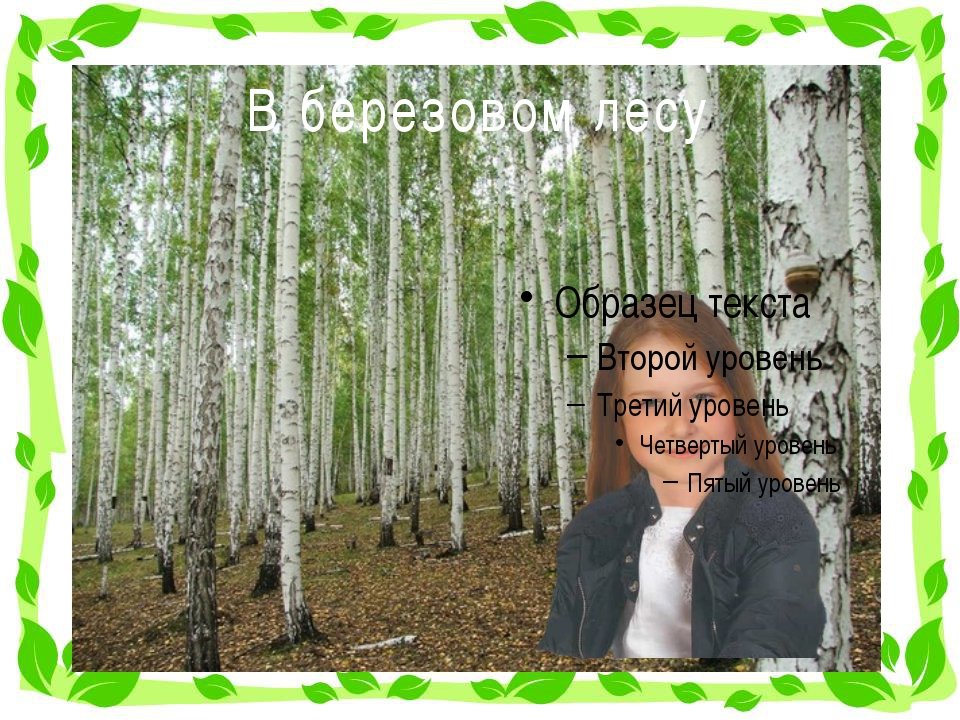 В березовом лесу