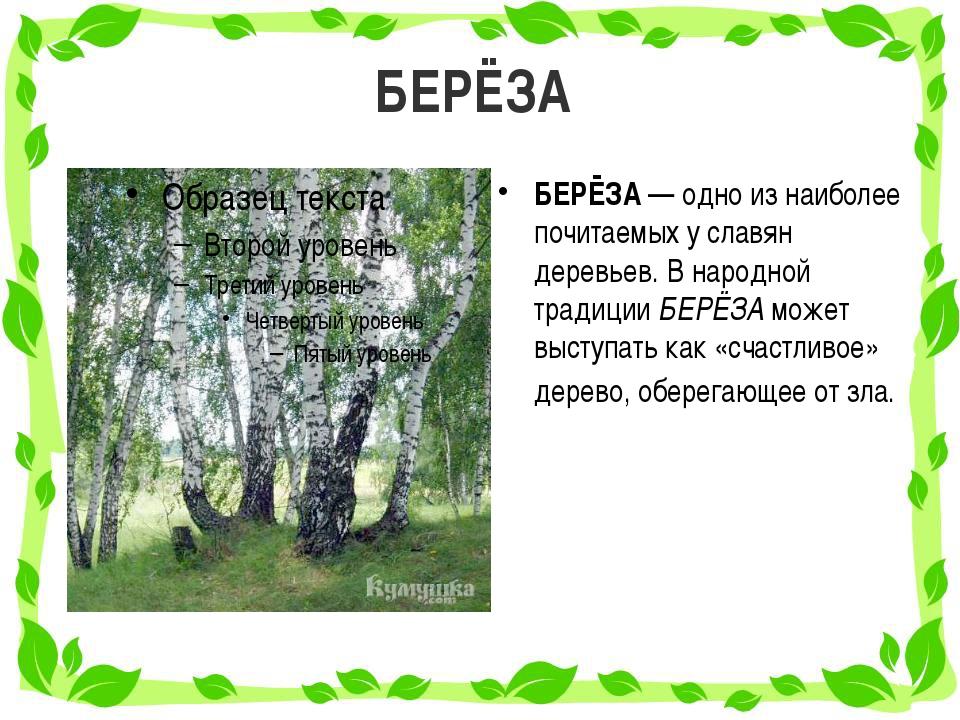 БЕРЁЗА БЕРЁЗА — одно из наиболее почитаемых у славян деревьев. В народной тра...