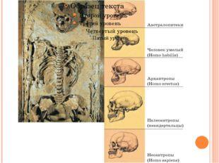 Эволюция черепа