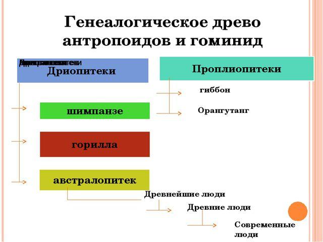 Генеалогическое древо антропоидов и гоминид гиббон Орангутанг Древнейшие люди...
