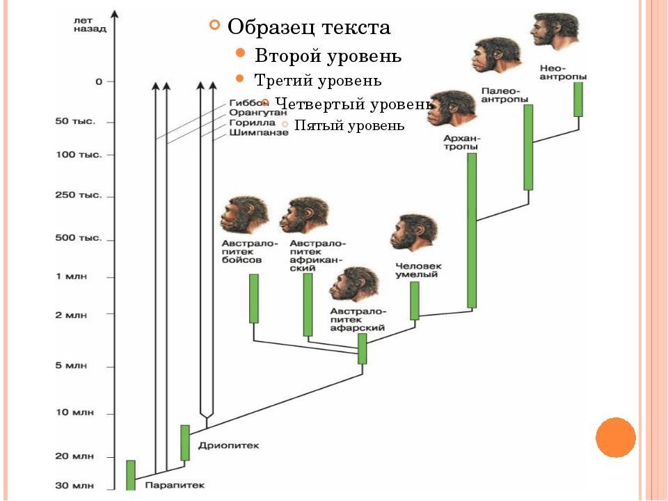 Общая схема происхождения человека