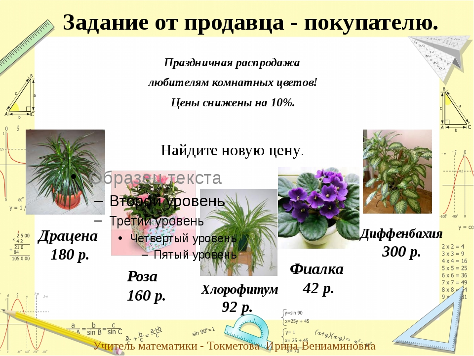 Праздничная распродажа любителям комнатных цветов! Цены снижены на 10%. Задан...