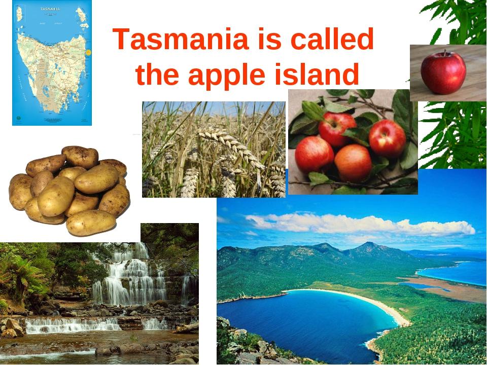 Tasmania is called the apple island