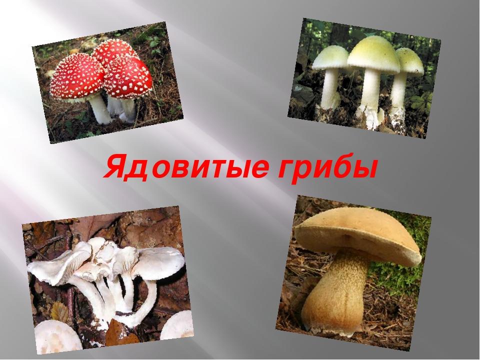 ядовитые грибы россии презентация пляжи