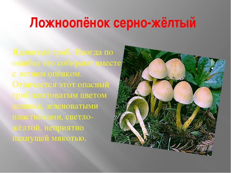 ядовитые грибы россии презентация собственно названия темы