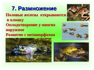 7. Размножение Половые железы открываются в клоаку Оплодотворение у многих на