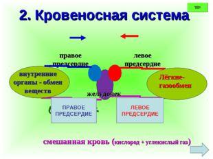 2. Кровеносная система Лёгкие- газообмен внутренние органы - обмен веществ же