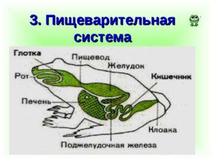 3. Пищеварительная система