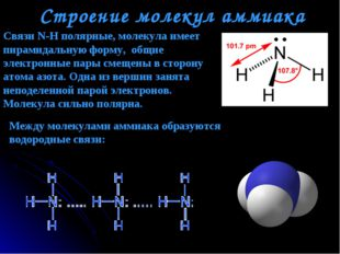 Строение молекул аммиака Между молекулами аммиака образуются водородные связи