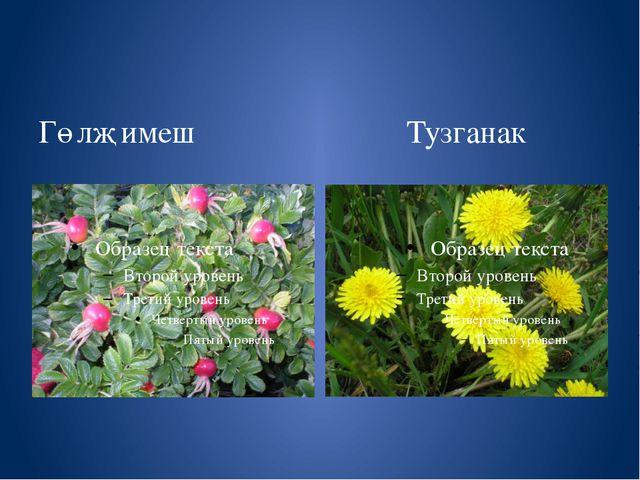 Гөлҗимеш Тузганак