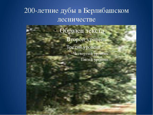 200-летние дубы в Берлибашском лесничестве