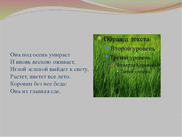Она под осень умирает И вновь весною оживает, Иглой зеленой выйдет к свету,...