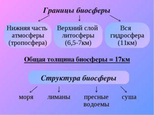 Границы биосферы Нижняя часть атмосферы (тропосфера) Верхний слой литосферы (
