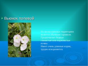 Вьюнок полевой На окультуренных территориях является обычным сорняком. Предпо