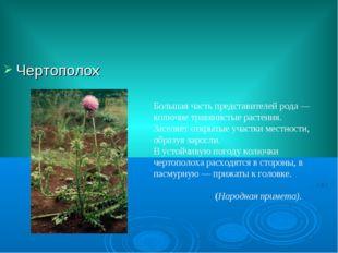 Чертополох Большая часть представителей рода— колючие травянистые растения.