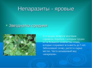 Непаразиты - яровые Звездчатка средняя В огородах является злостным сорняком,