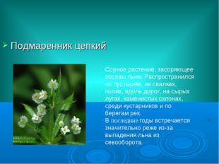 Подмаренник цепкий Сорное растение, засоряющее посевы льна. Распространился п