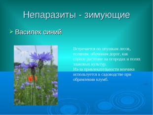 Непаразиты - зимующие Василек синий Встречается по опушкам лесов, полянам, об
