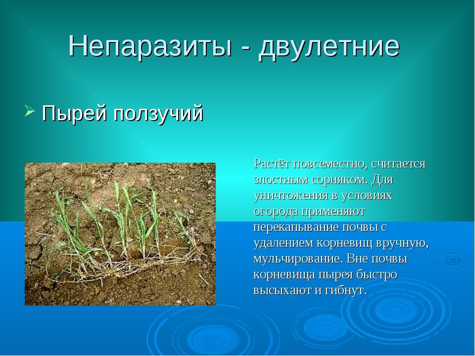 Непаразиты - двулетние Пырей ползучий Растёт повсеместно, считается злостным...