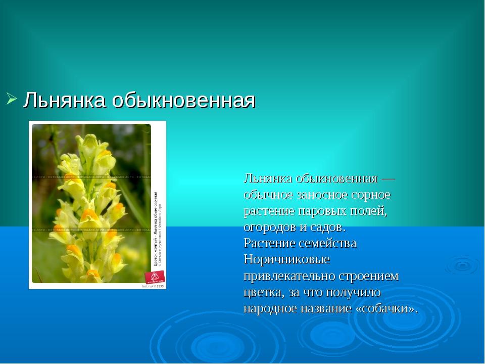 Льнянка обыкновенная Льнянка обыкновенная— обычное заносное сорное растение...