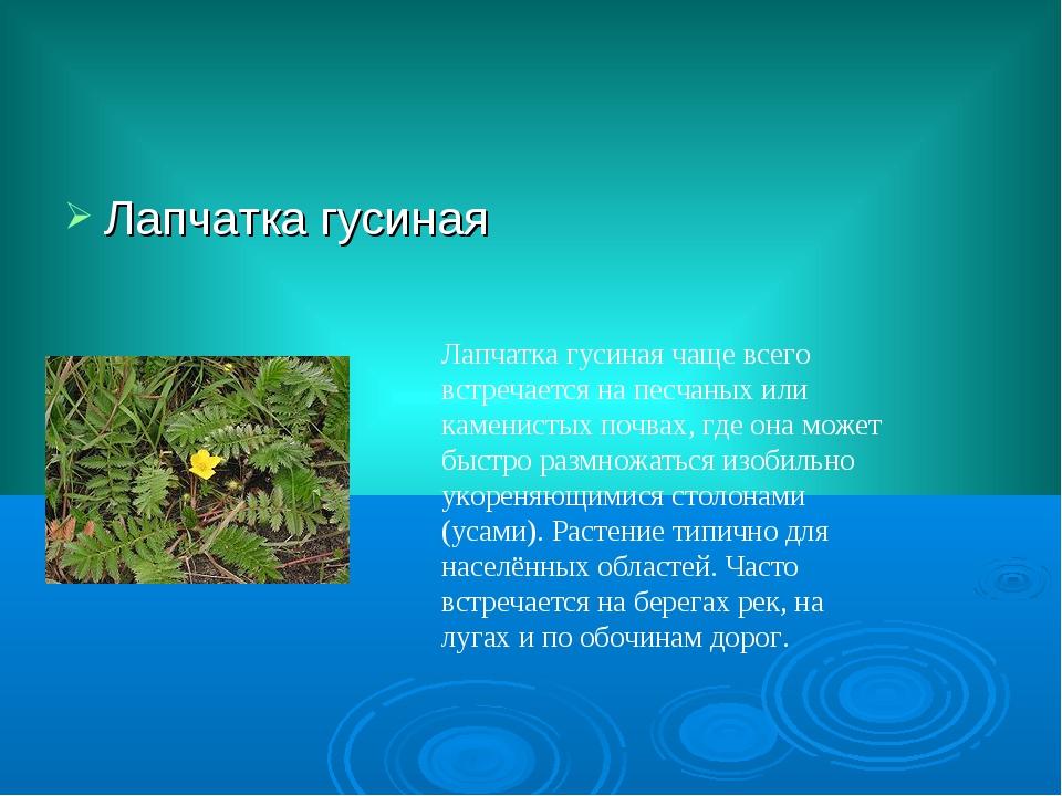 Лапчатка гусиная Лапчатка гусиная чаще всего встречается на песчаных или каме...