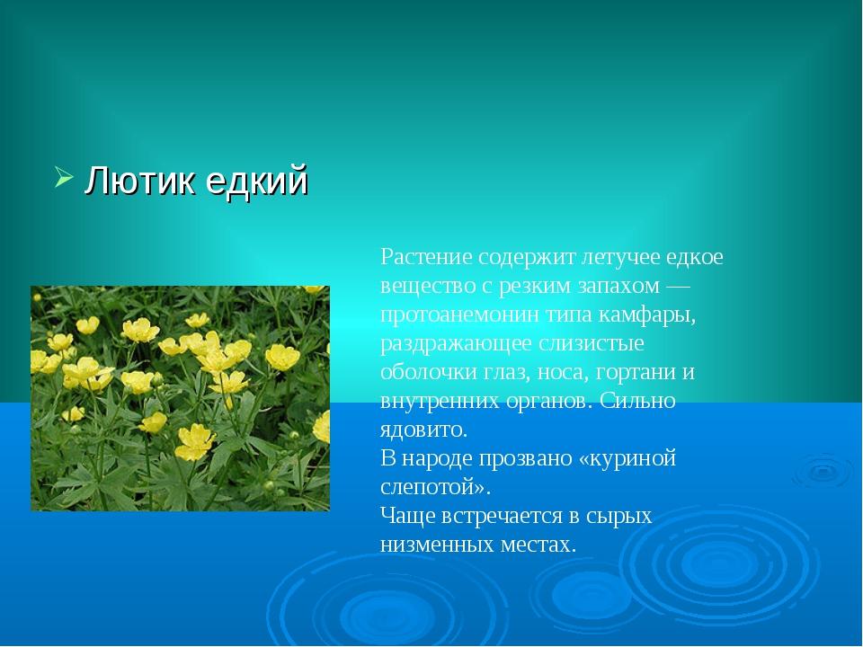 Лютик едкий Растение содержит летучее едкое вещество с резким запахом — прото...