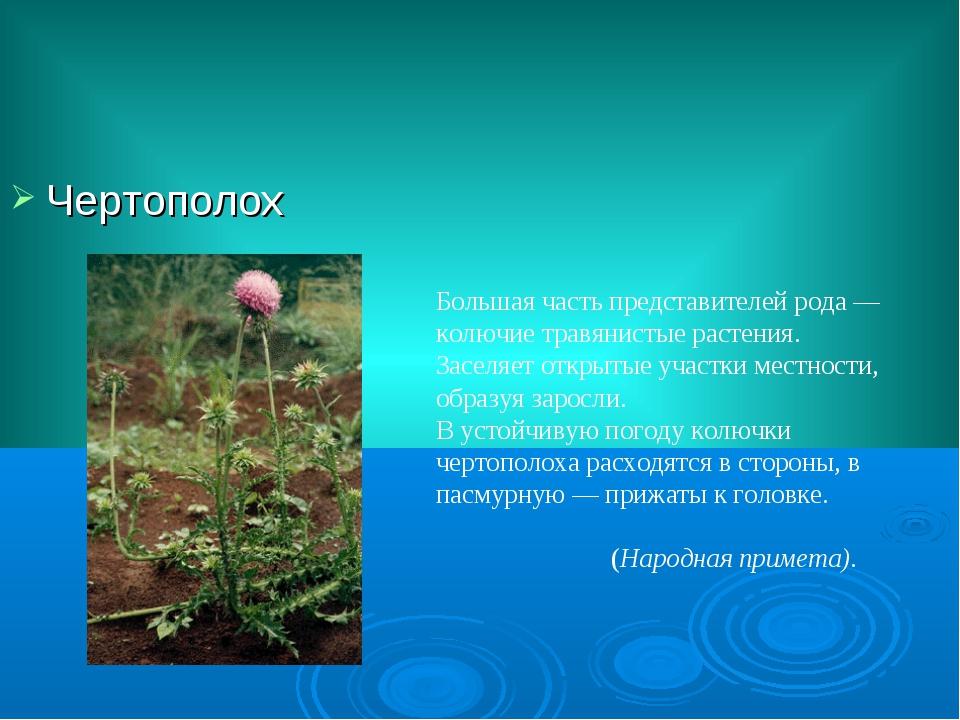 Чертополох Большая часть представителей рода— колючие травянистые растения....