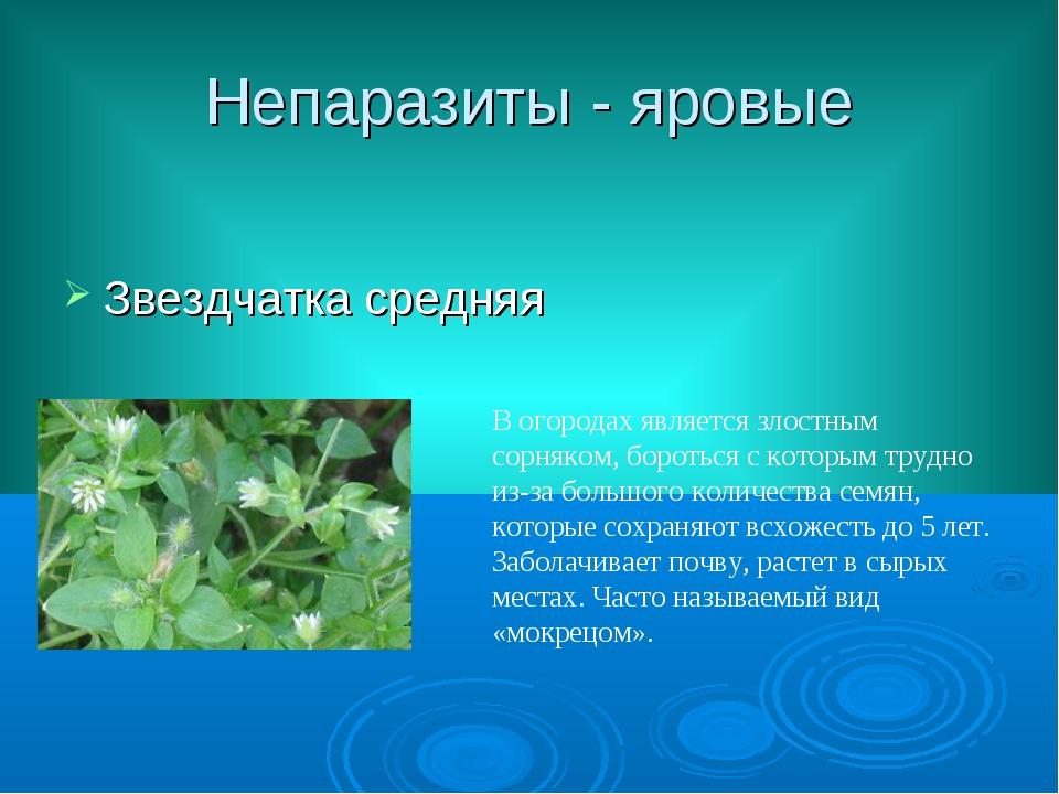 Непаразиты - яровые Звездчатка средняя В огородах является злостным сорняком,...
