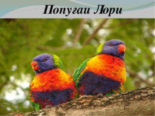 Попугаи Лори