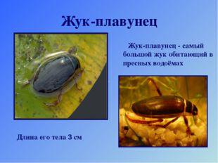 Жук-плавунец Жук-плавунец - самый большой жук обитающий в пресных водоёмах Дл