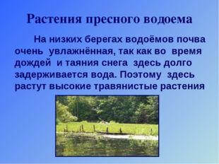 Растения пресного водоема На низких берегах водоёмов почва очень увлажнённая,