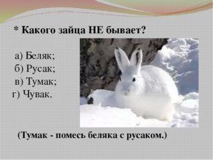 * Какого зайца НЕ бывает? а) Беляк; б) Русак; в) Тумак; г) Чувак. (Тумак - п