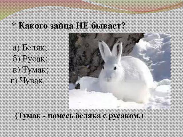 * Какого зайца НЕ бывает? а) Беляк; б) Русак; в) Тумак; г) Чувак. (Тумак - п...